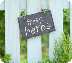 recipiephotos-herbs